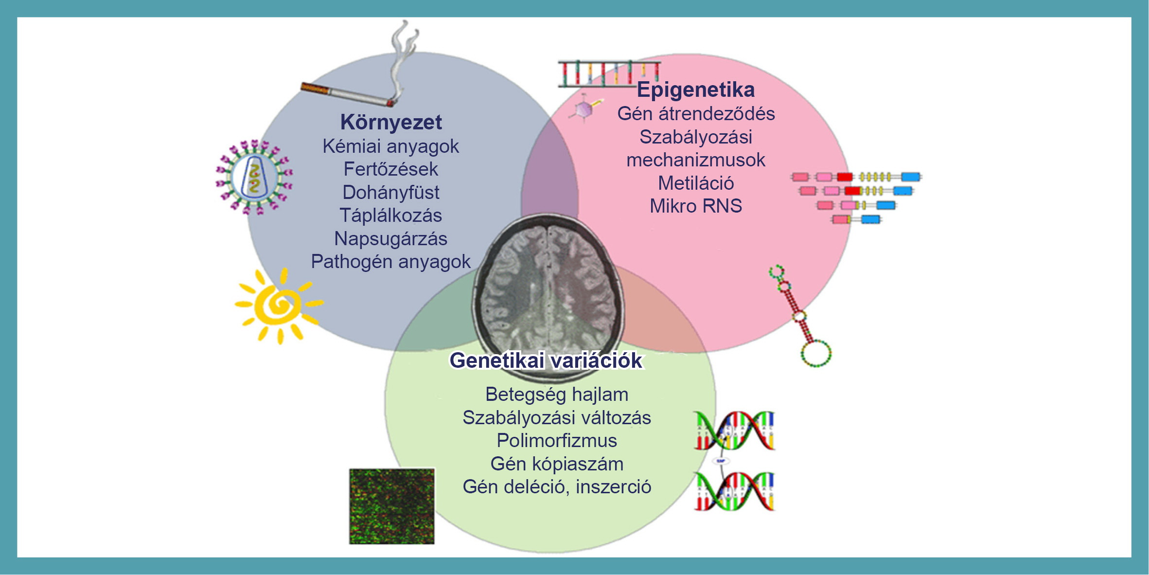 A betegségek megelőzésének tudománya